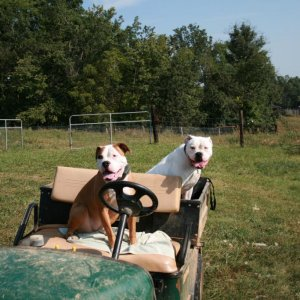 2009.09.10 003 - Dakota and Buster chillin out on my Sisters Golf Cart on her Farm in Kentucky