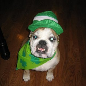 Dressing up for St. Patty's day!