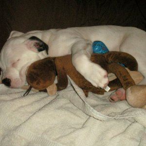Hank sleeping with his monkey (Feb. 2010)