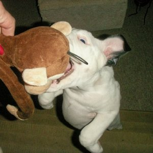 "Hank says ""Gimme back MY monkey!!!"""