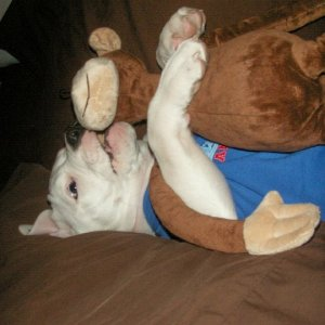 Hank LOVES his monkey!