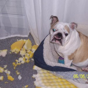 me and my husband still laugh about that picture....she tore her bed up.. :-))
