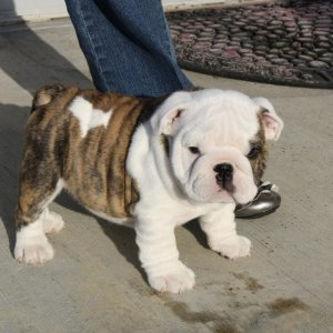Showing of his wrinkles.