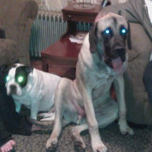 They are possessed