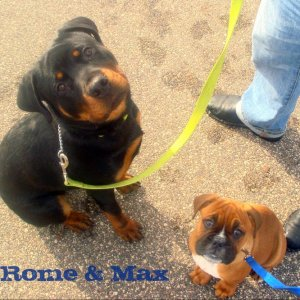 @ 12 weeks, with my buddy Max :-)